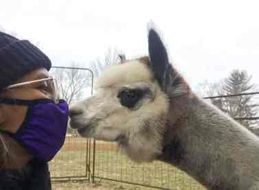 Sister Jessica Vitente helps caring for the alpacas over the Christmas holiday.