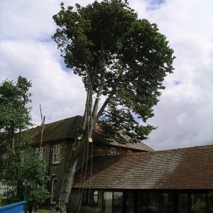 Dangerous Tree Removal Chichester