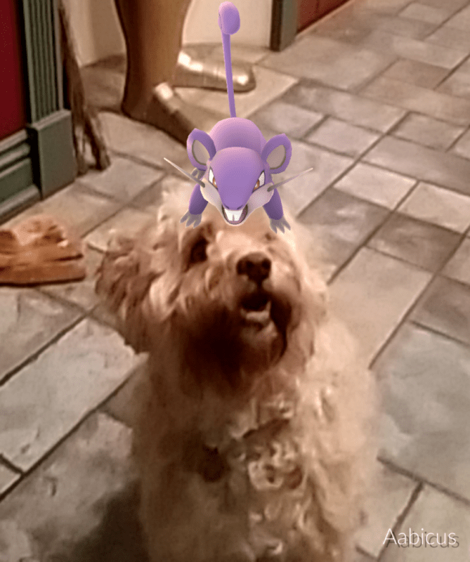 But ultimately, it was all still worth it because of this picture of my dog with a Rattata on his head.