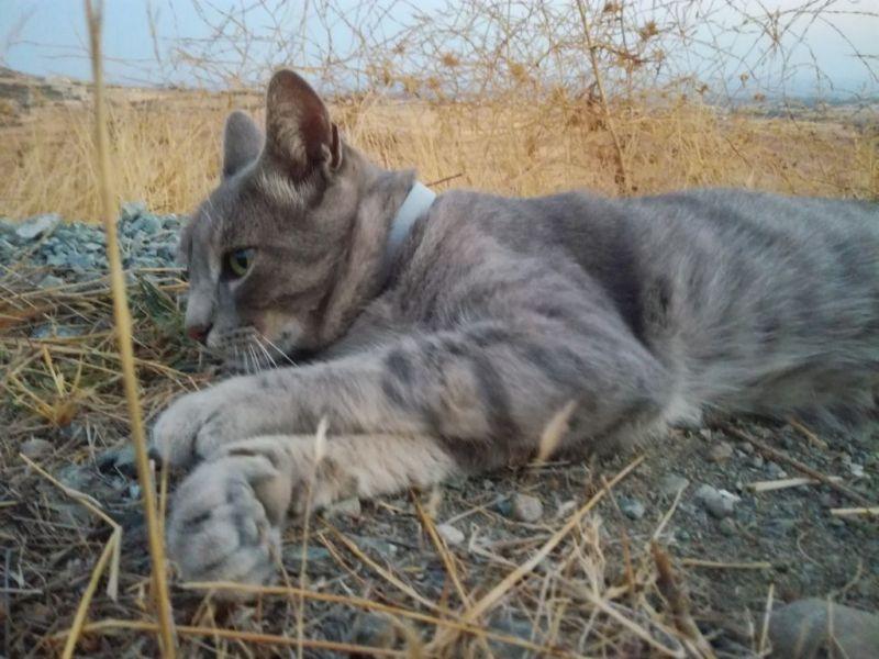 Ringo the cat