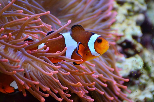 A Clown Fish. Completely Unrelated.