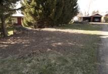 Nermejade kvadratmetrar av Rönnspirea i den blivande perennrabatten. maj12