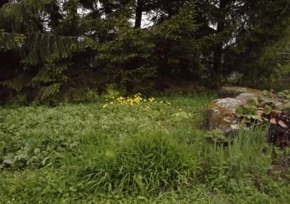 Vid stenarna. juni12