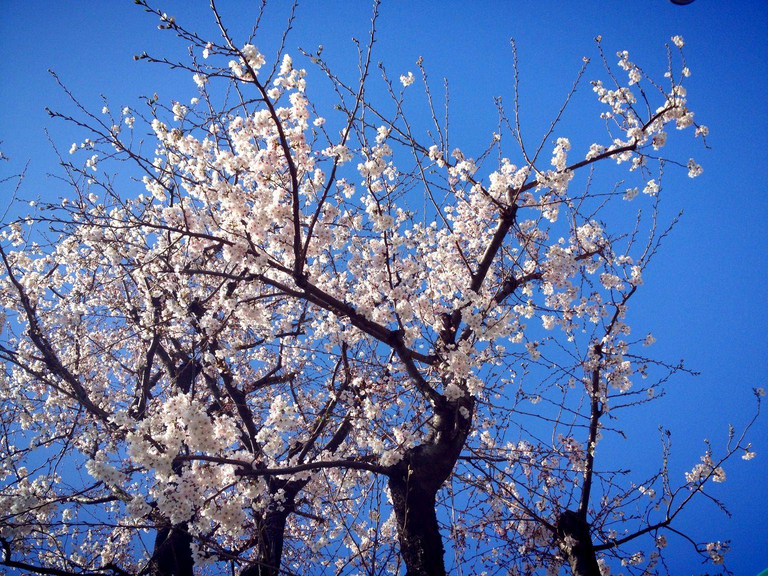 Editorial zur ersten Ausgabe: Der Frühling ist da!