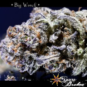 Big Wreck - Cannabis Macro Photography by Spurs Broken (Robert R. Sanders)
