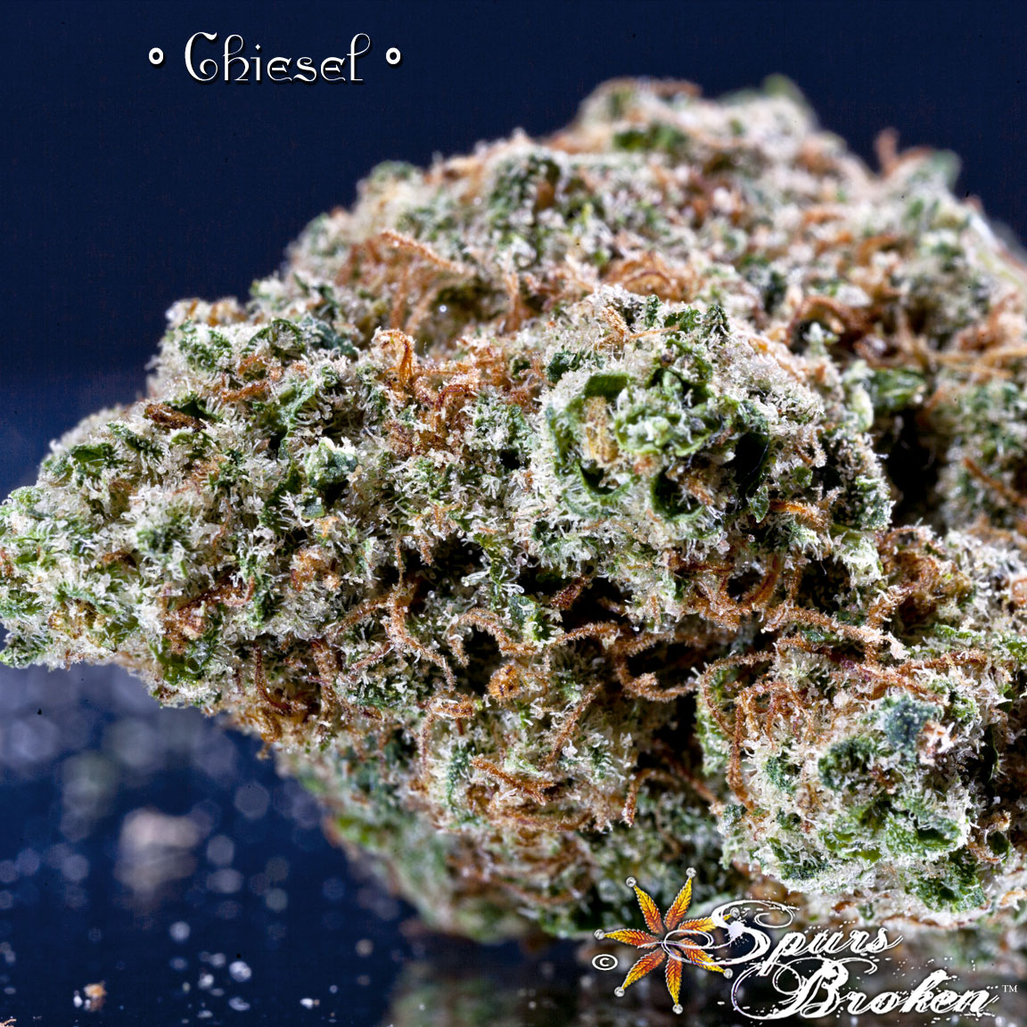 Chiesel - Cannabis Macro Photography by Spurs Broken (Robert R. Sanders)