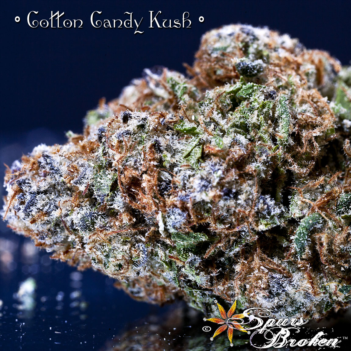 Cotton Candy - Cannabis Macro Photography by Spurs Broken (Robert R. Sanders)