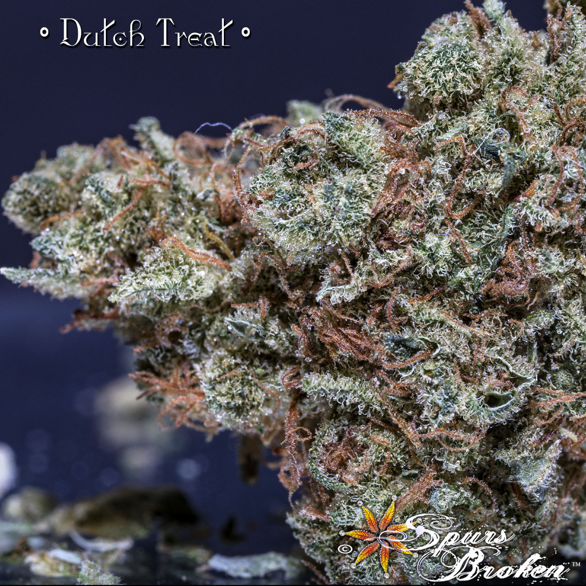 Dutch Treat - Cannabis Macro Photography by Spurs Broken (Robert R. Sanders)