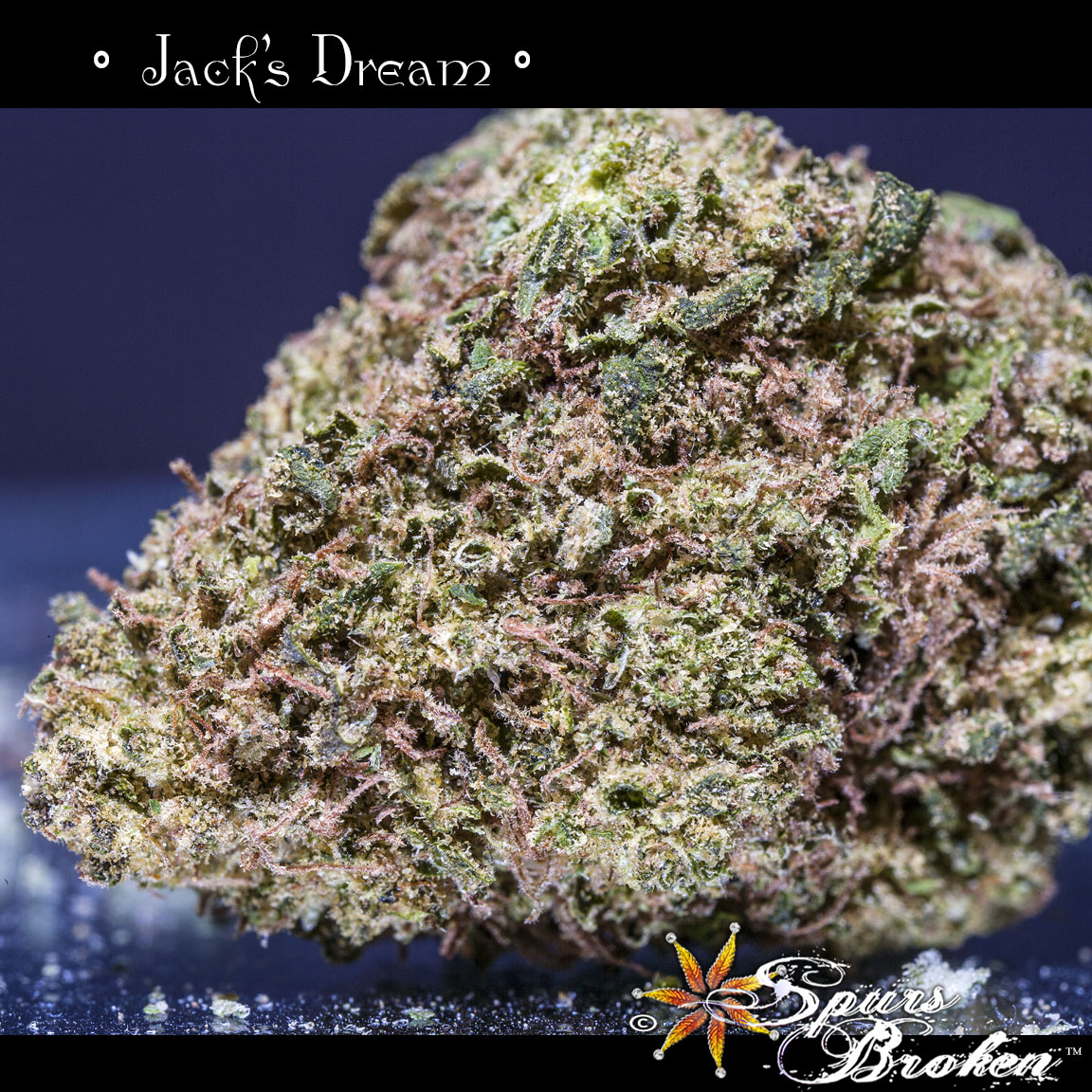 Jack's Dream - Cannabis Macro Photography by Spurs Broken (Robert R. Sanders)