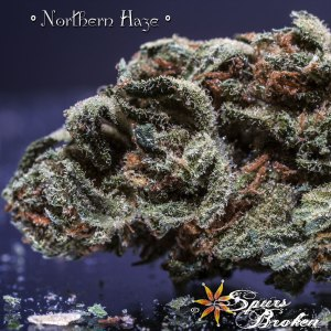 Northern Haze- Cannabis Macro Photography by Spurs Broken (Robert R. Sanders)