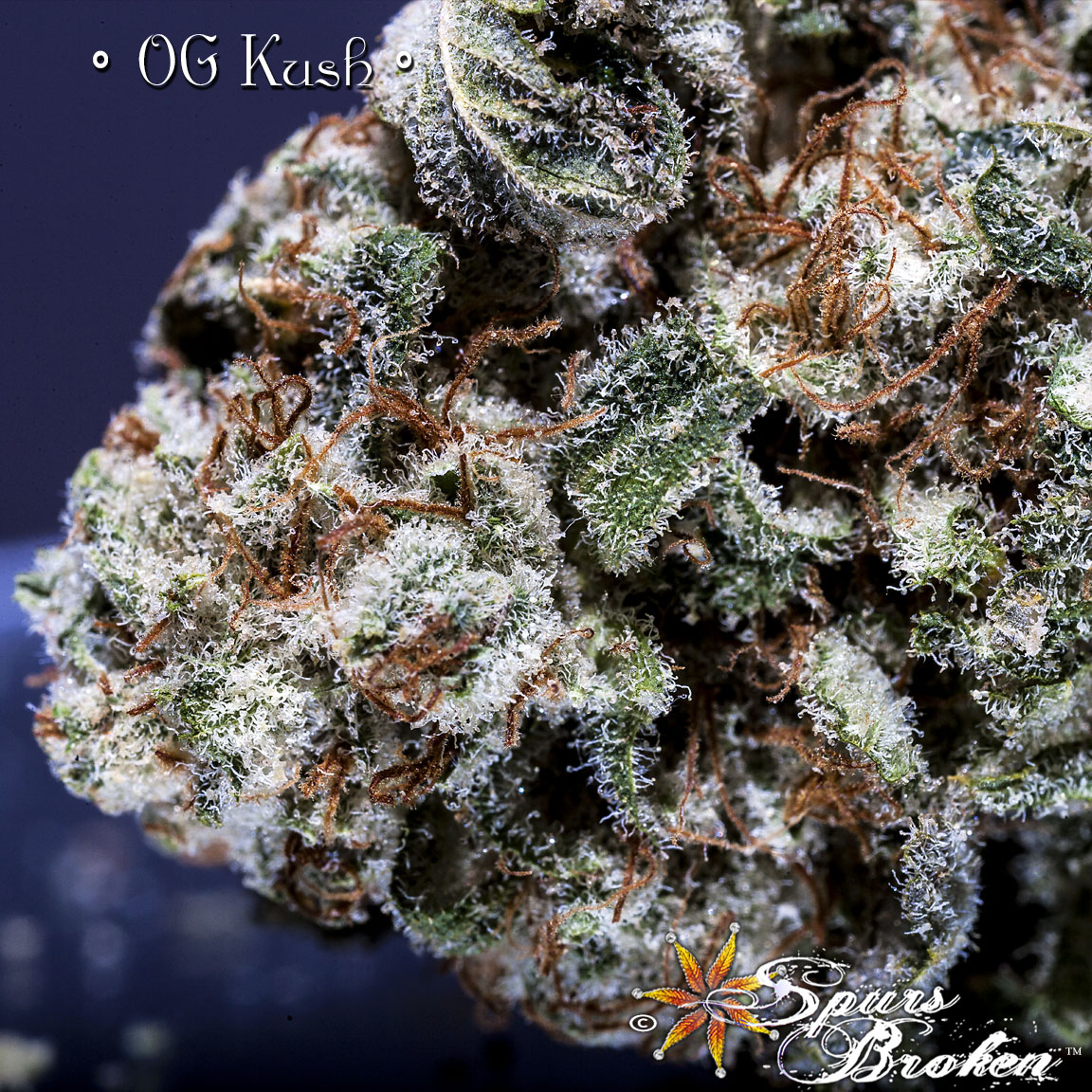 OG Kush - Cannabis Macro Photography by Spurs Broken (Robert R. Sanders)