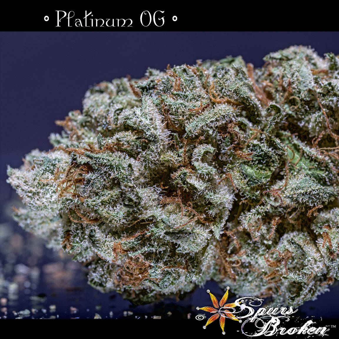 Platinum OG - Cannabis Macro Photography by Spurs Broken (Robert R. Sanders)