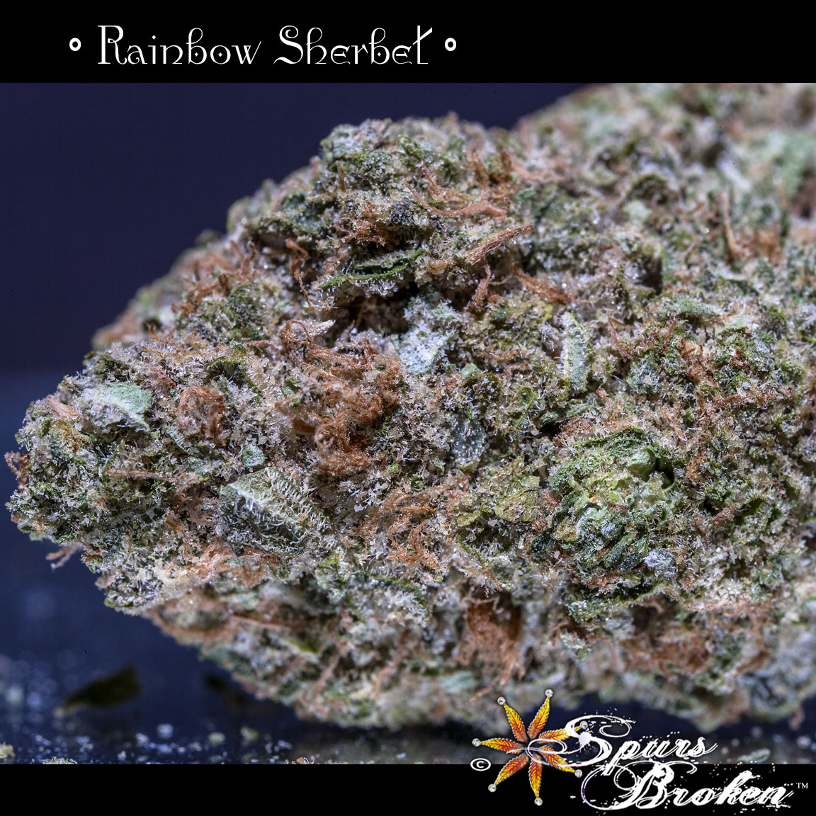 Rainbow Sherbet | Spurs Broken