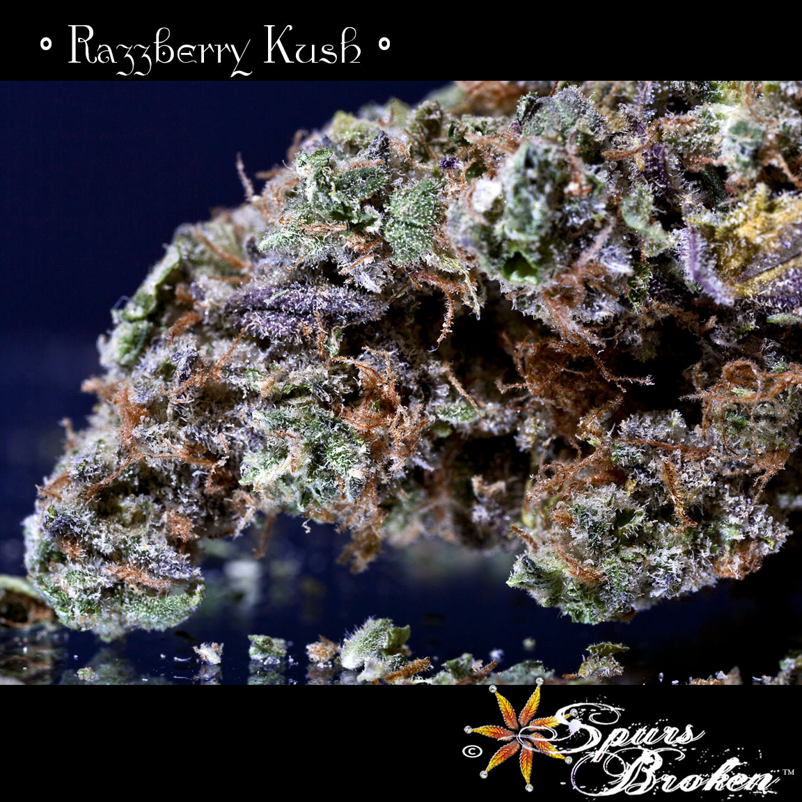 Razzberry Kush - Cannabis Macro Photography by Spurs Broken (Robert R. Sanders)