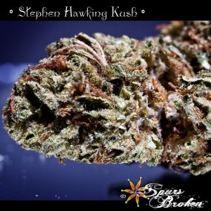 Stephen Hawking Kush - Cannabis Macro Photography by Spurs Broken (Robert R. Sanders)