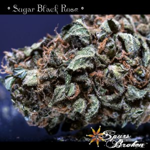 Sugar Black Rose - Cannabis Macro Photography by Spurs Broken (Robert R. Sanders)