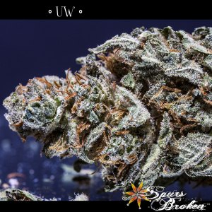 UW - Cannabis Macro Photography by Spurs Broken (Robert R. Sanders)
