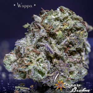 Wappa - Cannabis Macro Photography by Spurs Broken (Robert R. Sanders)