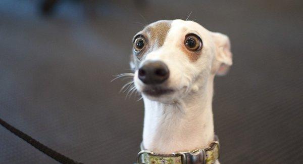 Кинолог назвал топ-10 популярных пород собак в Грузии