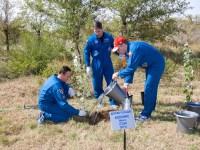 Con la ayuda de sus compañeros de tripulación de la Expedición 37/38; el Ingeniero Sergey Ryazanskiy (izquierda), el comandante de la Soyuz Oleg Kotov (derecha) y el Ingeniero de Vuelo Michael Hopkins de la NASA (centro) plantan cada uno un árbol en su nombre como parte de las ceremonias tradicionales detrás de los cuartos del Hotel del Cosmonauta, donde se aloja la tripulaciónen Baikonur, Kazakstán 18 de septiembre Hopkins, Kotov y Ryazanskiy están listos para el lanzamiento del 26 de septiembre, el tiempo de Kazakstán, desde el cosmódromo de Baikonur en su nave espacial Soyuz TMA-10M, pasarán cinco meses y medio en una misión en la Estación Espacial Internacional. NASA / Victor Zelentsov