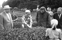 El Primer Secretario del PCUS Nikita Jrushchov y el Primer Ministro de Cuba Fidel Castro observan a una koljosiana recolectando ojas de té en la Granja Colectiva de Duripsh, Región de Gudauta, RSSA de Abjasia, Unión Soviética. Foto: Vasili Yegórov / ITAR-TASS.