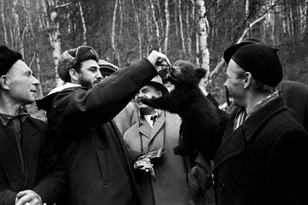 El Primer Ministro de Cuba, Fidel Castro alimenta a un osezno junto a un grupo de geólogos en la región de Irkutsk, RSFS de Rusia, Unión Soviética. Foto: ITAR-TASS.