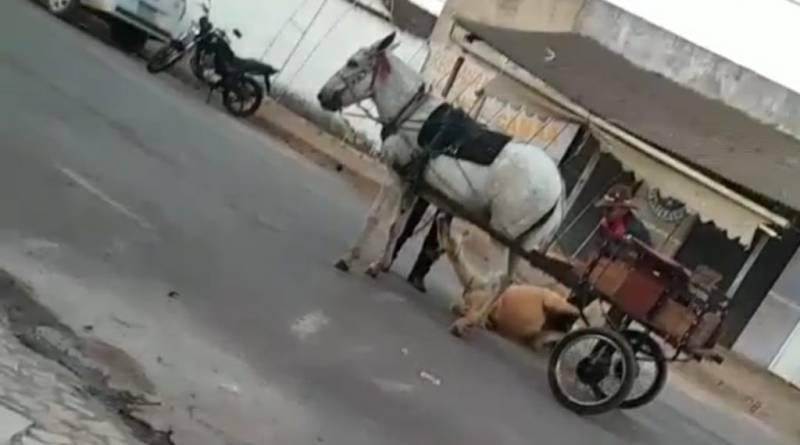 Vídeo mostra homem maltratando cavalo caído no chão preso a uma carroça em Unaí