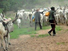 son of herdsman