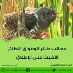 عجائب طائر الوقواق ، الطائر الأخبث على الإطلاق