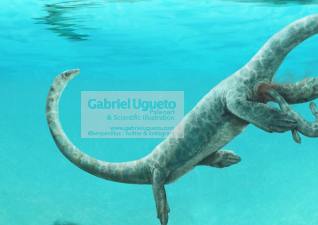 This is Dinocephalosaurus, a tanystropheid that had live birth and a *ridiculously* long neck. Its neck elongation is achieved by elongation of the vertebrae, completely different from how all modern legless lizards have elongated. By Gabriel.