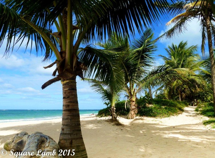 White Sand and Palm Trees