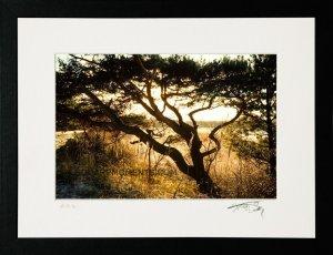 2001 Tree