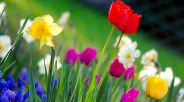 Ways to Save Money this Spring