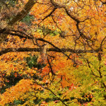Fall Is the Best Time to Plant a Tree