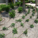 Drip Irrigation Photo: Plant Nursery Tampa