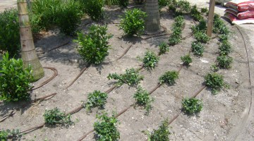 Easy to Assemble Drip Irrigation that Pays for Itself