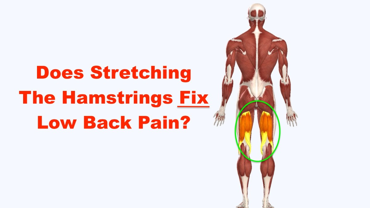 Does Stretching The Hamstrings Fix Low Back Pain? – Squat University