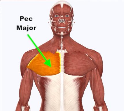 Pec Major
