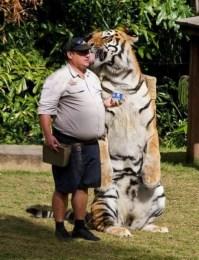 Amazing Animals (18)