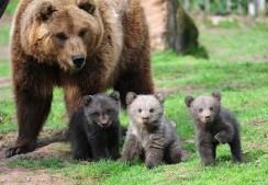 Amazing Animals (2)