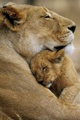 Amazing Animals (5)