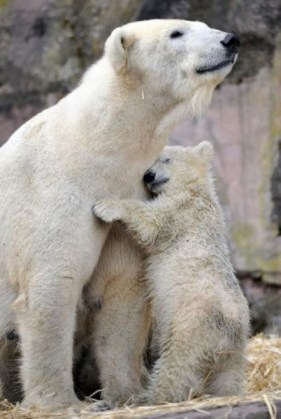 Amazing Animals (6)