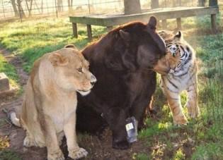 Amazing Animals (7)
