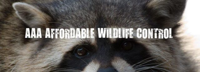 AAA Affordable Wildlife Control Reviews, Affordable Wildlife Control