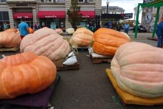 fat pumpkins 1