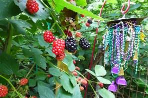 beady berries