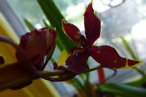 orchid 02
