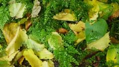ferns, hostas, and leaves