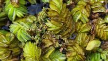 cool aquatic plants