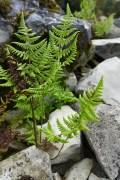 ferns on a faux mountain